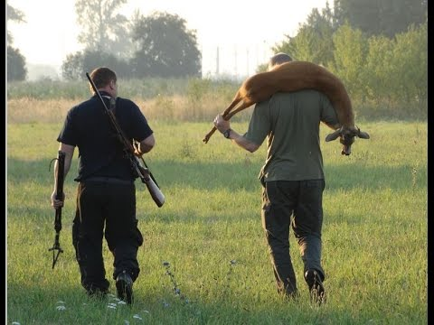 Great roebuck hunting – Polowanie na rogacza – strzał – Bock Jagd – Bukkejakt- Chevreuil chasse