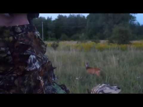 Locka rådjur med nordic roe i lövkamouflage – Närkontakt