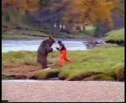Björn slagsmål
