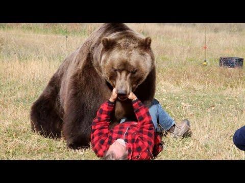 Så överlever du en björnattack