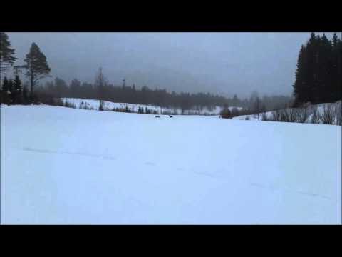 Unika bilder när lodjur fälls för finsk stövare