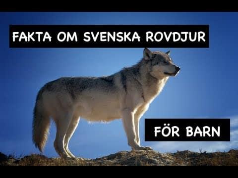 Fakta om svenska rovdjur för barn – Varg Brunbjörn Räv Lodjur Mink Järv
