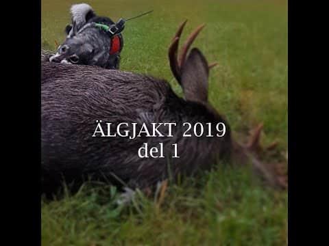 Älgjakt 2019 del 1
