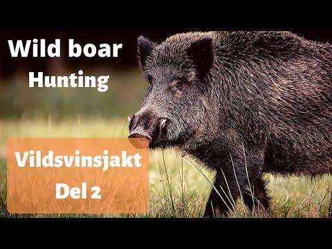 Vildsvinsjakt på Hörningsholm del 2 – Det bästa från svensk jakt 2019