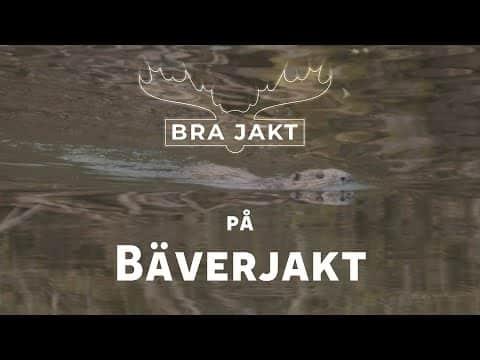 Bäverjakt Norrbotten