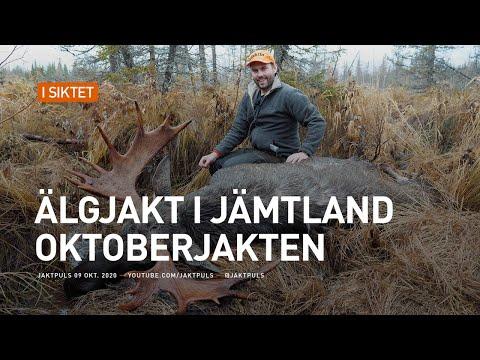 Älgjakt i Jämtland – oktoberjakten